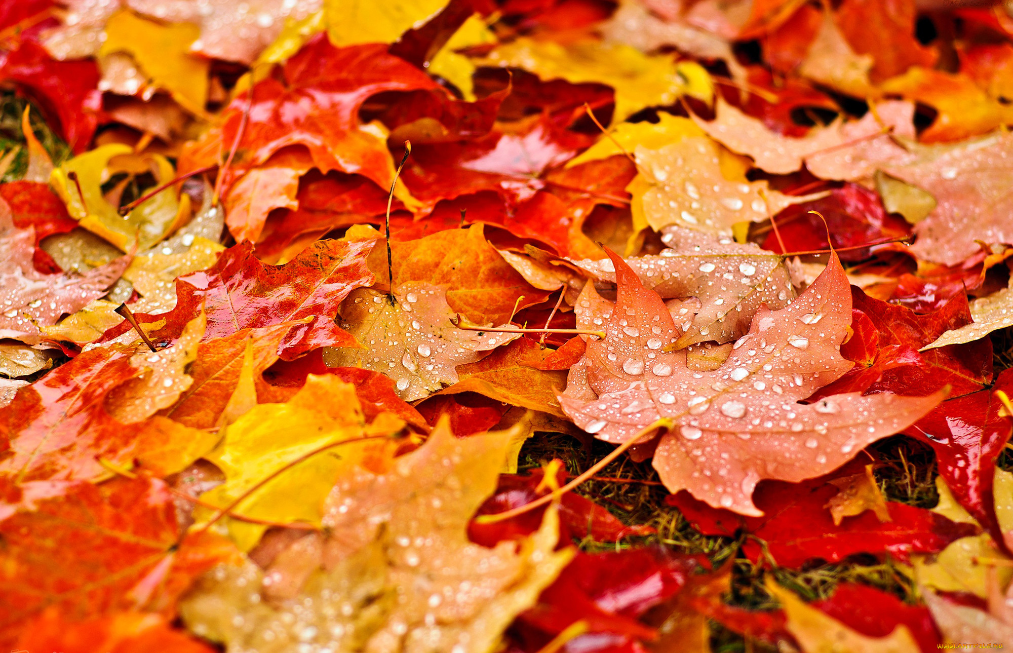 совершенно картинки листья опадают листья показ